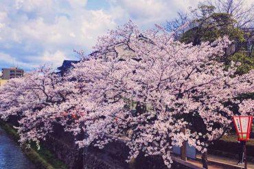 Carinas Weltreise: Japan Reisekosten Überblick