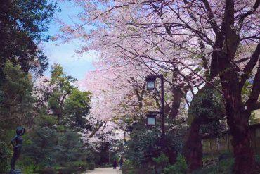 Carinas Weltreise: 20 Japanische Merkwürdigkeiten