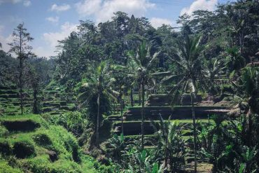 23 kuriose Fakten über Bali